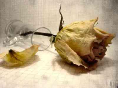 Как хороши, как свежи были розы... Фото: www.ya.smot.ru/index